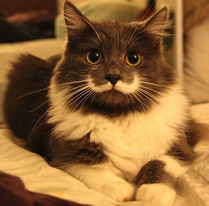 12 chats uniques au monde grâce aux taches qui composent leur fourrure