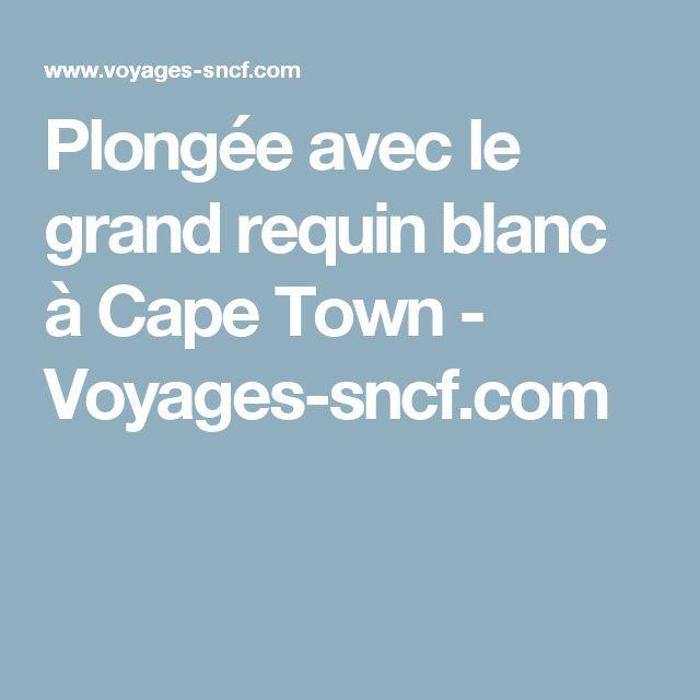 Plongée avec le grand requin blanc à Cape Town - Voyages-sncf.com