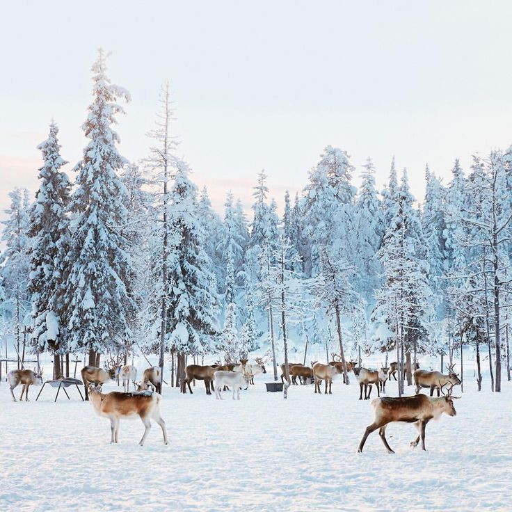 See this Instagram photo by /nytimes/ • Jokkmokk, Sweden
