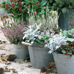 Il giardino d'inverno: arredo e piante per tutte le stagioni