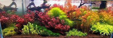 Dutch style aquarium - Поиск в Google