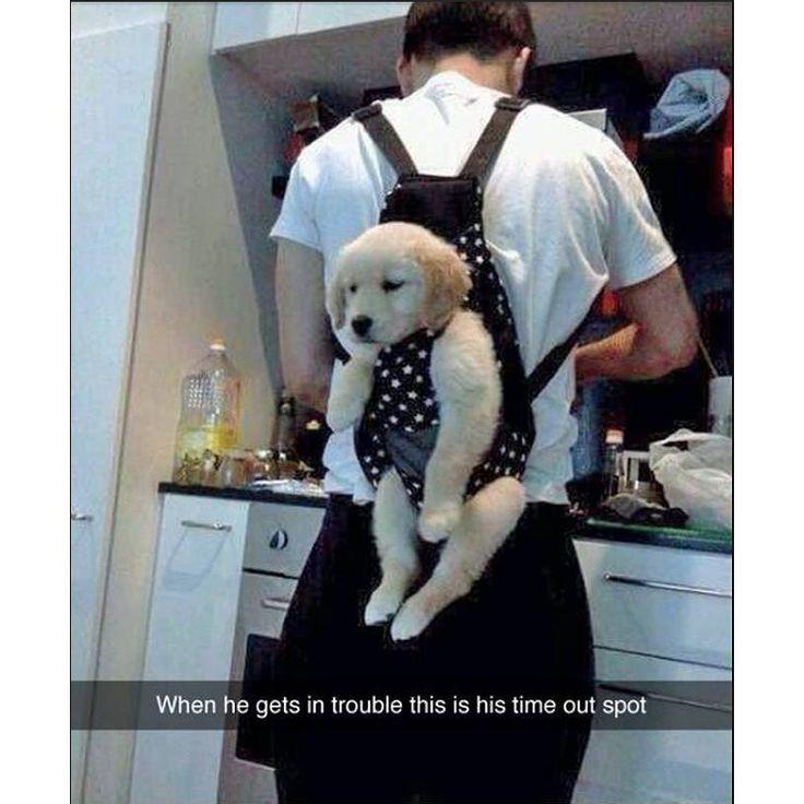 I promise I'll be good #yizzam #dog #puppy #funny #joke #laugh  #animal #fur #freshoffthepress #fotp #style #ootd #fashion #sublimation #madeinusa