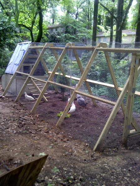 Our new chicken coop. Built by my loving husband :-) I wuv him and he wuvs me.