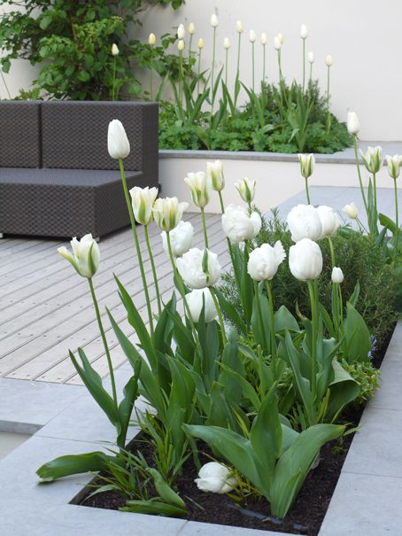 mixed variety of white tulips in white trough planters | contemporary Spring || Easter