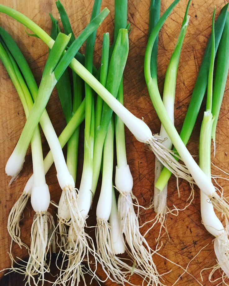 Home Grown Spring Onions http://www.looksgoodtastesgood.com/home/2017/2/28/home-grown-spring-onions Amanda Keats