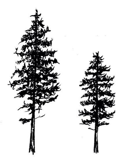 Pine tree. Would make a nice tribute to the piney woods of East Texas