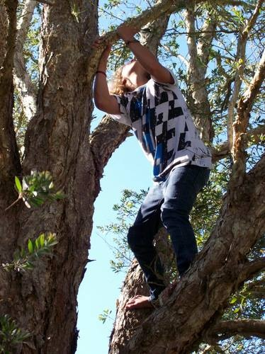Risky play, dodgy rules and the fine art of climbing trees