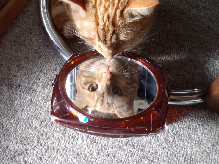 My darling Tiger - sees a mirror (and herself) for the first tme
