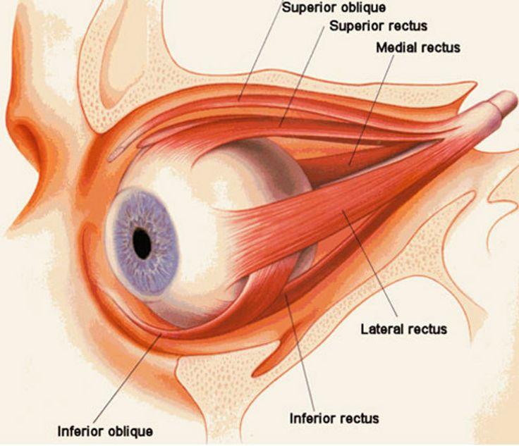 Аюрведа: Корень причины, по которой падает зрение, находится в кишечнике