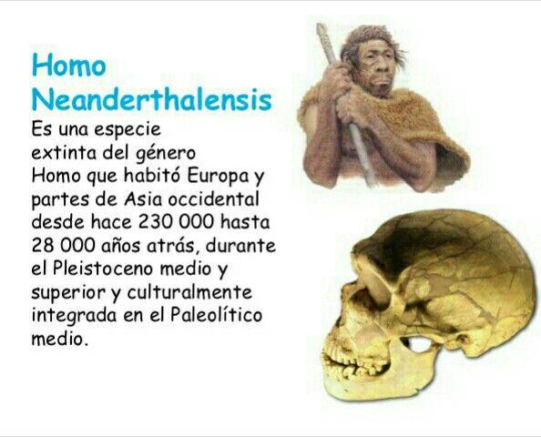 Elhombre de Neandertal (Homo neanderthalensisuHomo sapiens neanderthalensis) es unaespecieextintadel géneroHomoque habitóEuropay partes de Asiaoccidental desde hace 230000 hasta 28000 años atrás, durante elPleistoceno medio y superior y culturalmente integrada en elPaleolítico medio. Convivió con elhombre de Cromañón, primeroshombres modernosen Europa.
