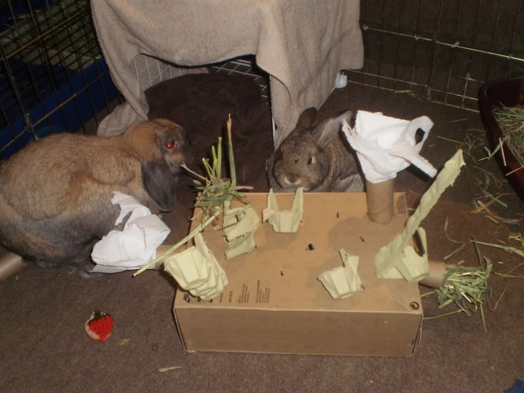 Pin by sonja johnson on rabbit fun pinterest for Homemade bunny houses