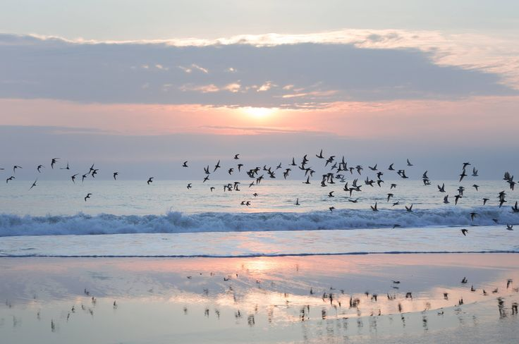 Dowitchers in flight at sunrise on Plum Island Massachusetts (OC) {53583566} #reddit