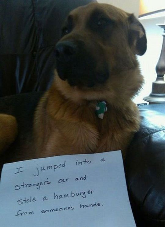 I literally laughed out loud at this dog shaming. His ears are pinned back too like he's really ashamed. Awesome! Lol