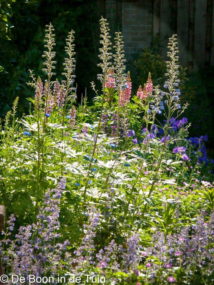 25 beste idee n over engelse tuinen op pinterest cottage tuinen lupine bloemen en engelse - Hoe aangelegde tuin ...
