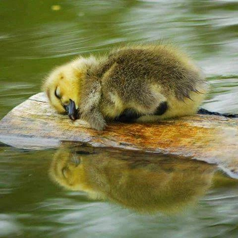 Precious little bird resting...if God cares for them how much more He cares for you and I.