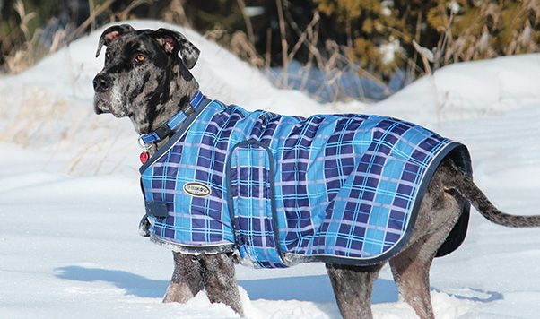 THE GLACIER (BLS1597) Keep your canine stylish and warm in the Glacier Dog Coat! The four unique plaid designs ensure your dog will be able to show off their personality. Reflective piping helps keep your dog visible on dark nights in the winter. Complete with a smooth nylon lining to help prevent rubs and a water resistant outer shell to help protect against all the elements.