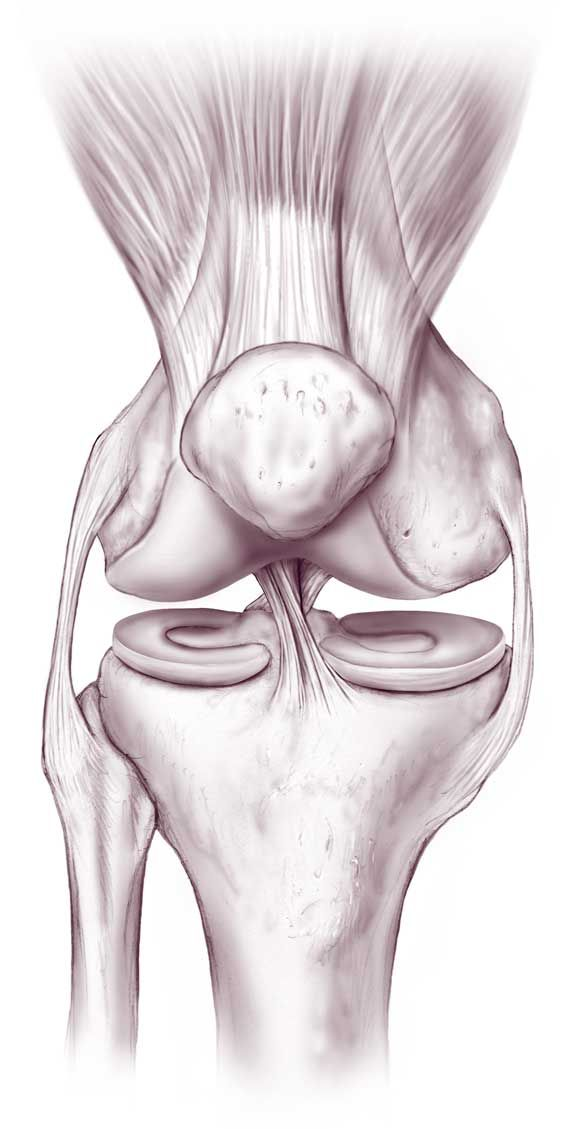 Knee Joint Anatomy, Function and Problems
