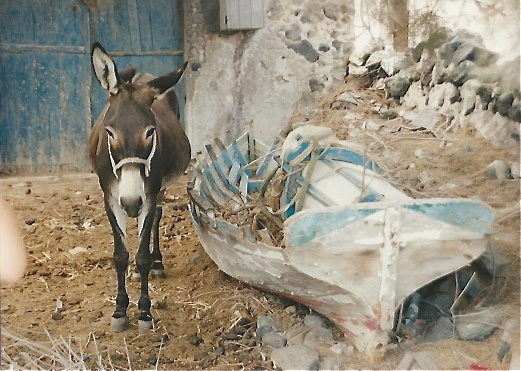 Donkey waiting for his owner by old boat in the Greek Islands. Scan 21