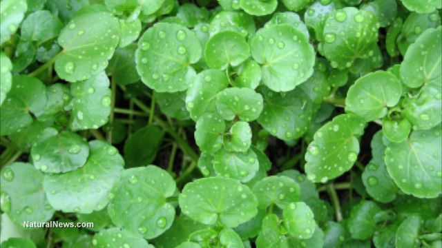 Six edible plants that will help you survive in the wild