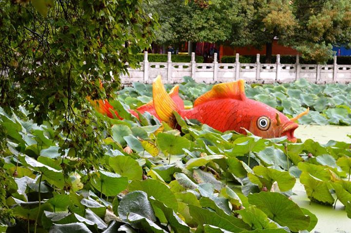 Green Lake Park, Kunming, China... #kunming #china #travel Photograph // Stephanie Osborn