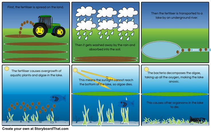 the eutrophication process storyboard by quenton4 water