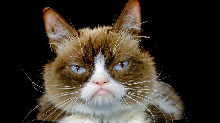 NPR News: Grumpy Cat Awarded $710000 In Copyright Infringement Suit #business #radio #music #broadcasting