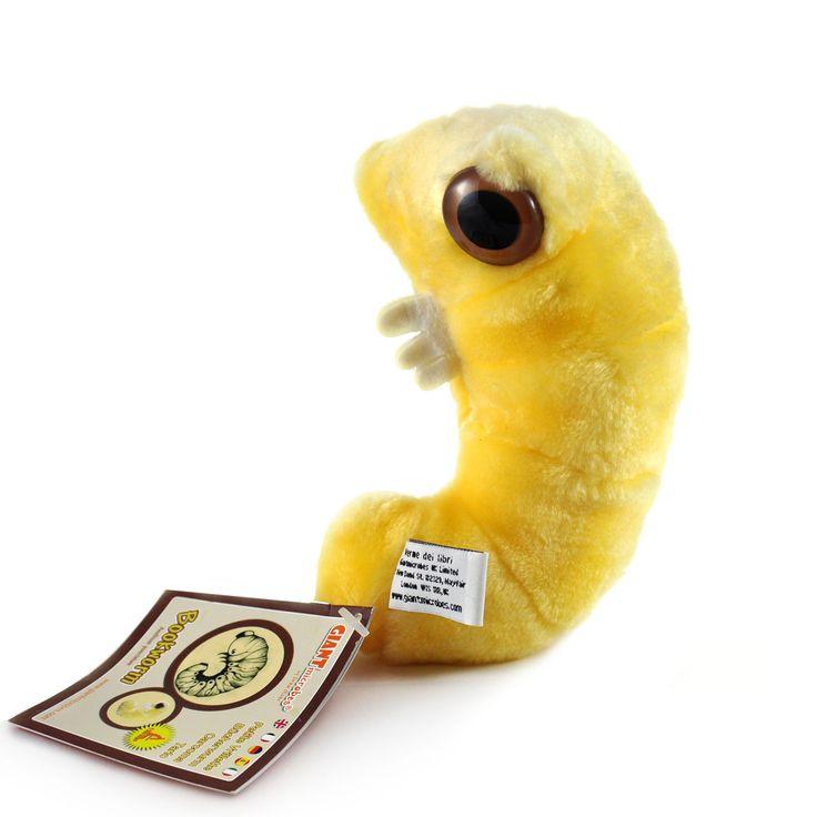 Mól książkowy jest pluszakiem kolorem, kształtem i wyglądem przypominającym żywe mikroorganizmy przepadające za dobrą lekturą. Jest od nich jednak znacznie większy – mierzy 16 cm.
