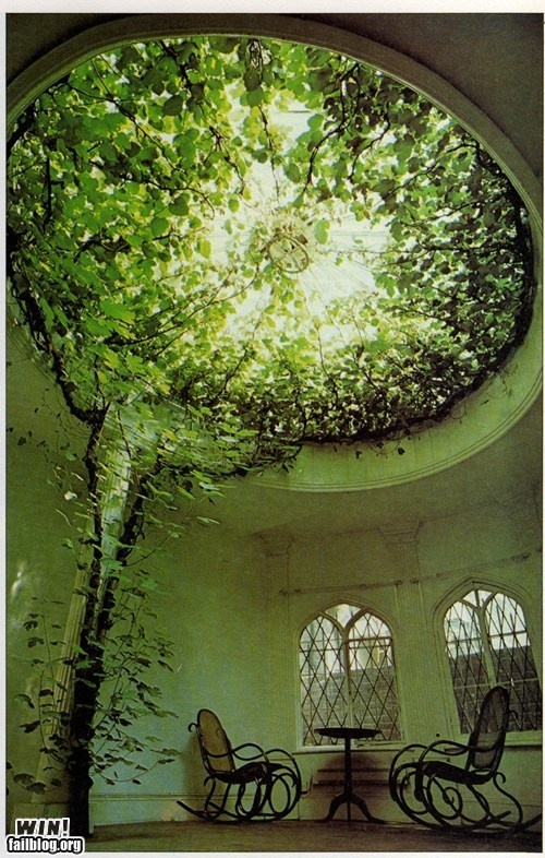 House plants? Yes!Glass Domes, Dreams, Interiors, Outdoor, Gardens, Glasses Dome, Places, Indoor Trees, Green Room