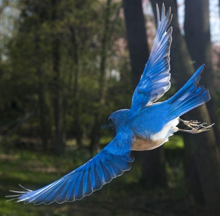 Une plume au vent.