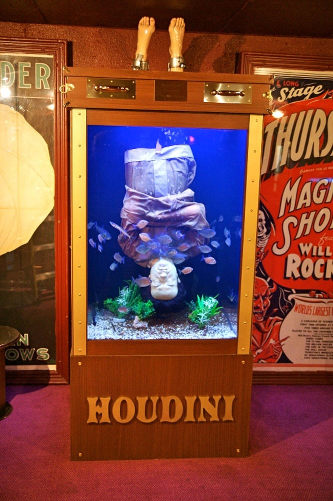 Houdini Fish Tank! WoodworkingNetwork.com