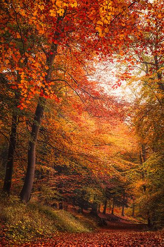 ~~Natures Fireworks | autumn forest | by Jago Bolduc~~