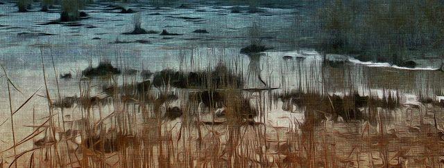 Irene Navarra / Visioni: Haiku / Acqua stagnante.