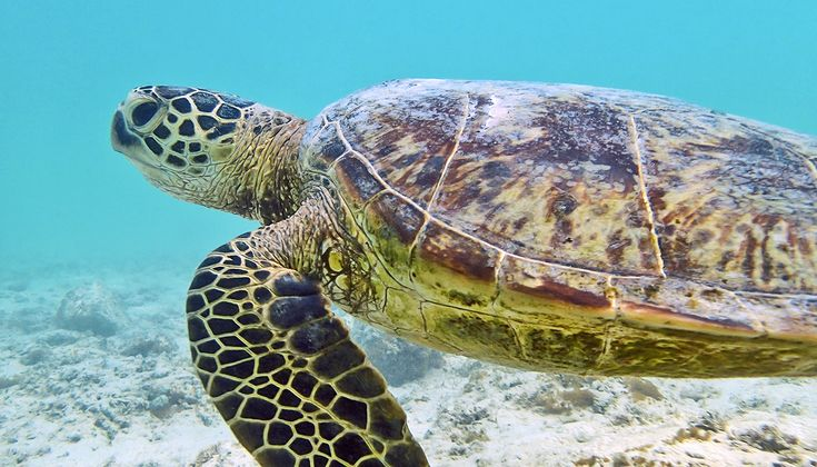 Pollution in urban and farm runoff in Hawaii is causing tumors in endangered sea turtles, a new study finds.