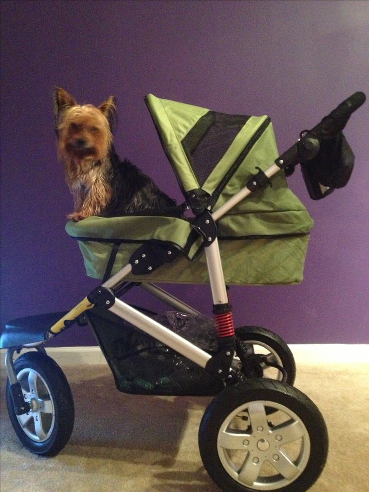 Best dog stroller with inside leashes for 2 dogs. Rain