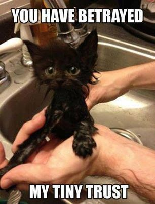 You have betrayed my tiny trust..