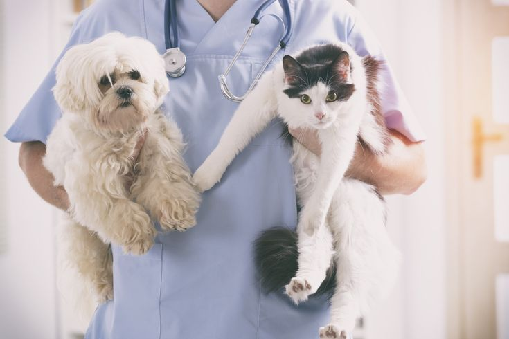 Vet Dog Cat His Hands | Pet insurance cost, Embrace pet ...