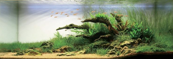 Aquascaping Symphony : ... and shrimp ideas on Pinterest Home design, The top and Aquascaping