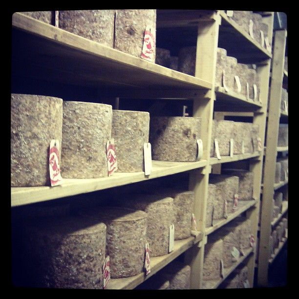 Took a chance & dropped in on Hafod, makers if fine Welsh Cheddar. Sam's a passionate maker of beautiful cheese #filthygoodfood The maturing room smelt wickedly good, earthy mite goodness. There's a batch of Hafod Cheddar on the way to OZ!