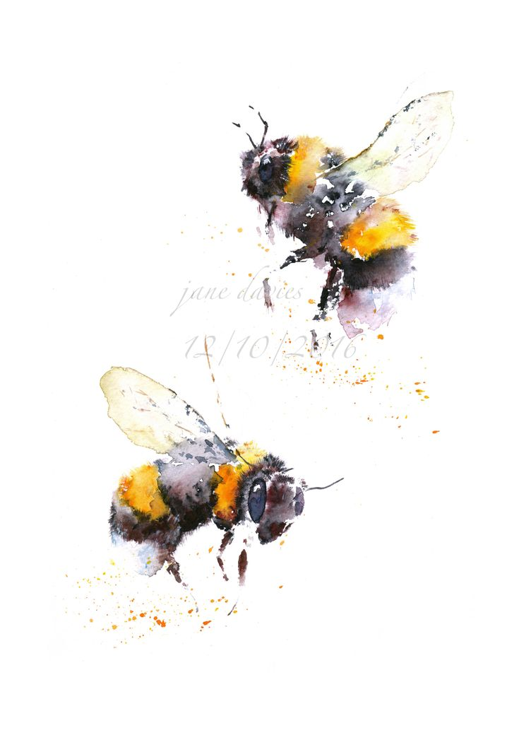 Bees painted by watercolour artist Jane Davies. Available to purchase as a limited edition print.