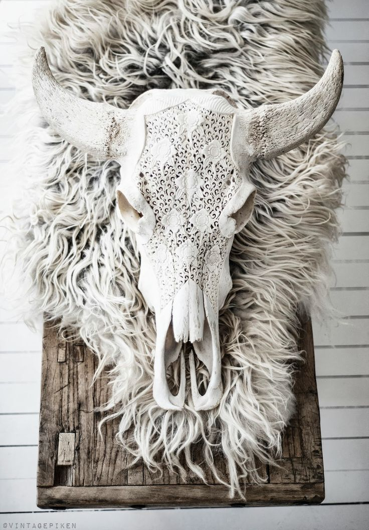 white cow skull... inspiration for SKULL CASHMERE'S Fall14 animal skull line.  Haven't seen it yet? Come by KB and check it out. It's waaaay cool.