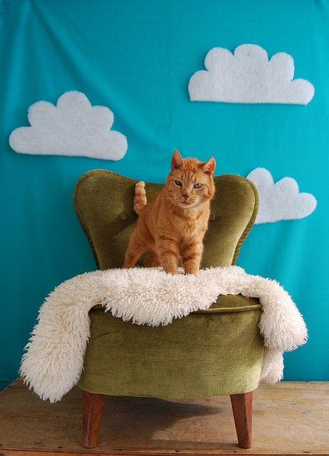 Kitty clouds
