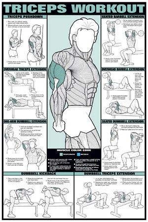 "Triceps WorkoutFitness Chart 24"" x 36"""