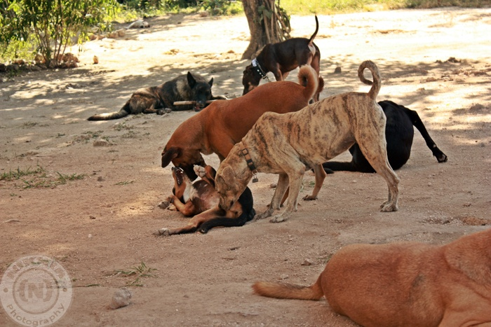 Over 200 animals. Dogs eat 5 bags of food per day. Adoption, resuce, and more. Check them out at   www.tierradeanimales.org