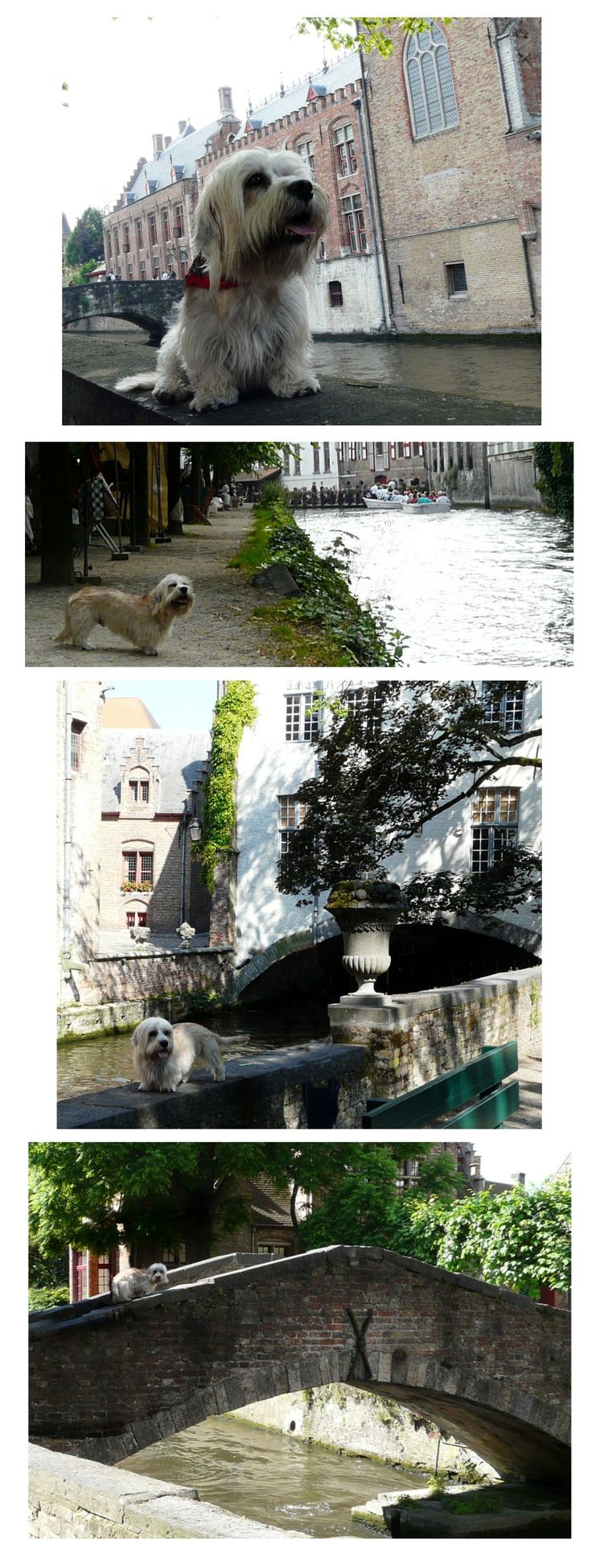 Ziggy had a short break in Brugge, Belgium!