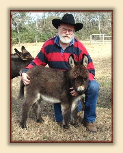 Care and training of the Miniature Donkey
