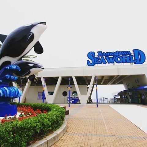 【japanhoppers】さんのInstagramをピンしています。 《Travel Guide - Japan Hoppers - Kamogawa Seaworld 鴨川シーワールド  #japanhoppers #japan #japanese #japantrip #travel #trip #instajapan #amazing #japão #japón #giappone #japon #chiba #kamogawa #killerwhale #Aquarium #jepun #jepang #اليابان #일본 #수족관 #日本 #旅遊 #絶景 #シャチ #鴨川シーワールド #千葉 #鴨川 #水族館 #アクアリウム》