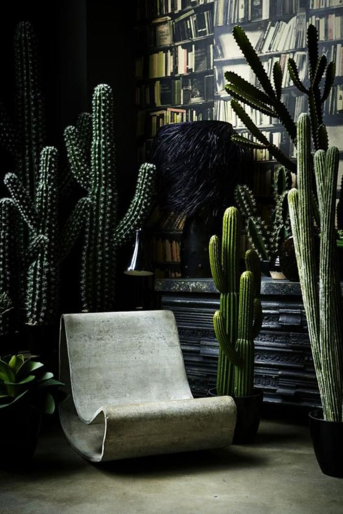 d corez avec les plantes grasses d 39 int rieur cacti dark interiors and interiors. Black Bedroom Furniture Sets. Home Design Ideas