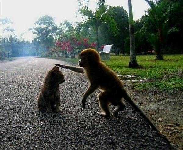 Funny Monkey Pictures!!! Check out these cute and funny animals! - Some Pets
