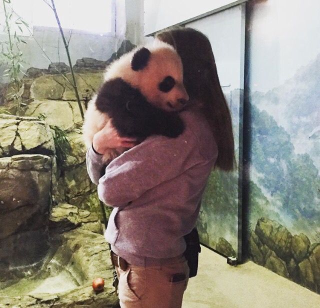 Bei Bei - Baby panda hugs (they must be the best hugs ever!)