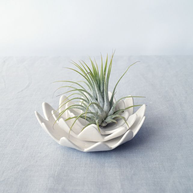 LOTUS Water Lily Airplant Holder With Growing Plant White Porcelain Bowl  Set.